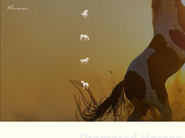 marwarihorses.in